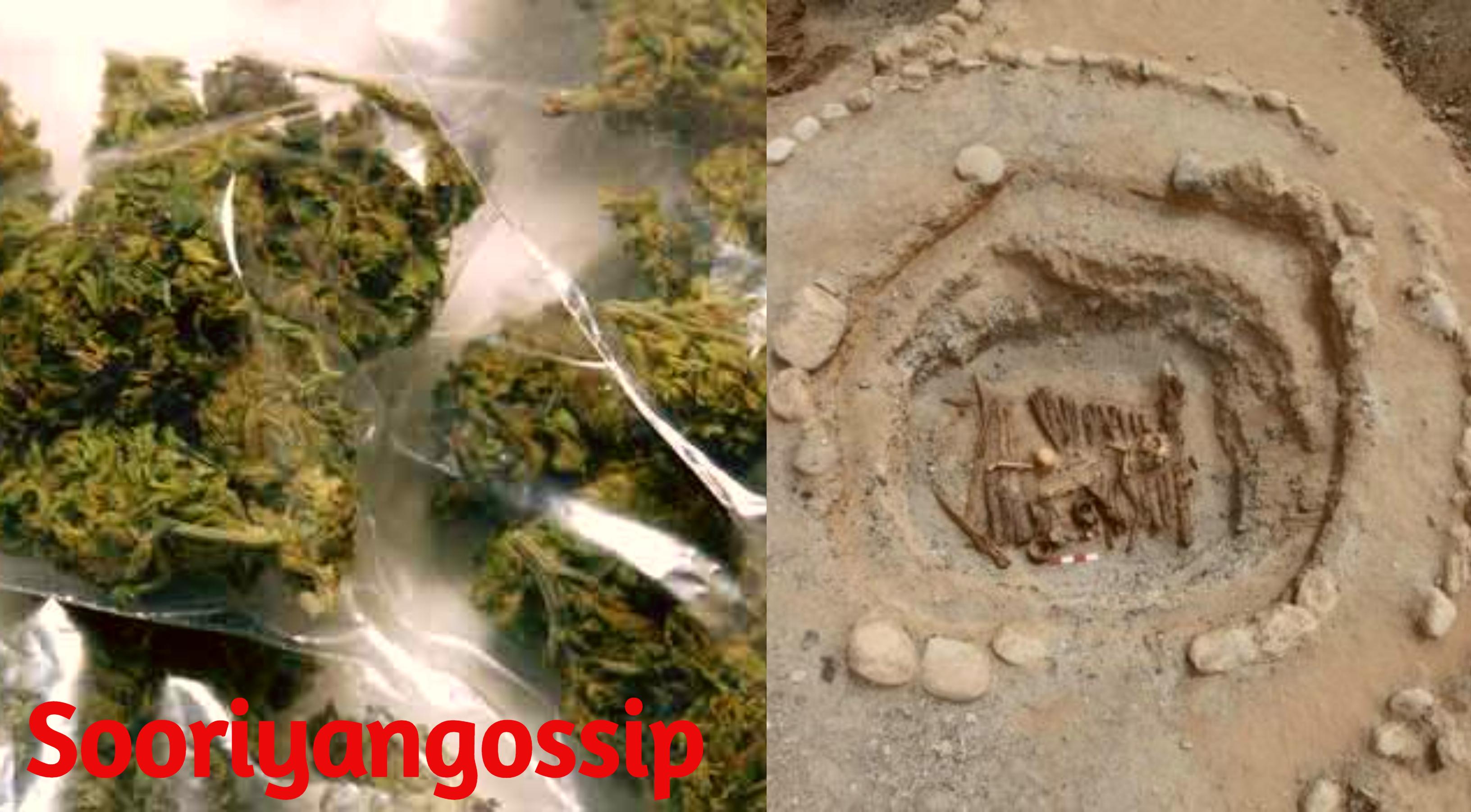 2500 ஆண்டுகளுக்கு முன்னரே, கஞ்சா பயன்படுத்தப்பட்டுள்ளது!!!
