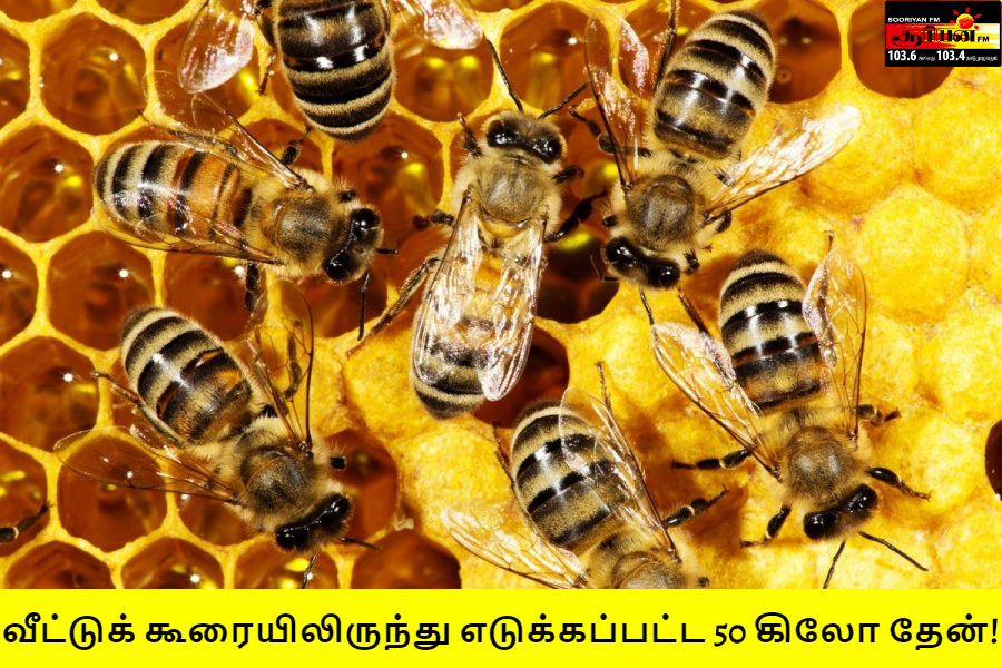 வீட்டுக் கூரையிலிருந்து எடுக்கப்பட்ட 50 கிலோ தேன்!
