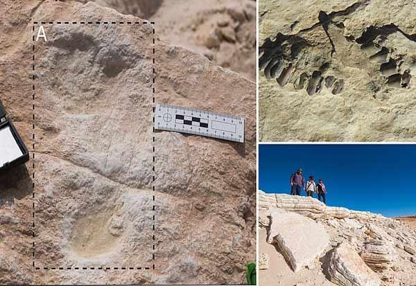சவுதி அரேபியாவில் 1,20,000 ஆண்டுகள் பழமையான மனித கால்தடங்கள் கண்டுபிடிக்கப்பட்டுள்ளன